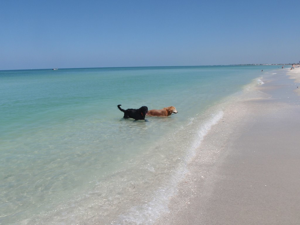 Dogs in the Surf at Beach in Gasparilla Island, Florida
