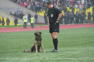 Dog, CSKA vs Spartak | by Kate_Lokteva