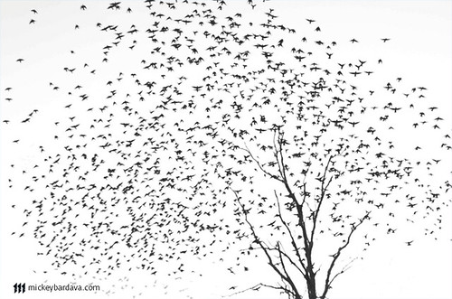 Bird Tree | by Mickey Bardava