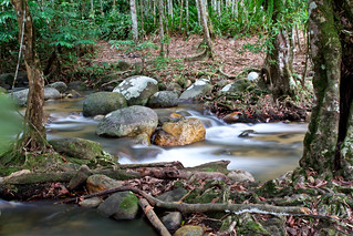 ulu yam rainforest (malaysia) | by novice photos (lawrence)