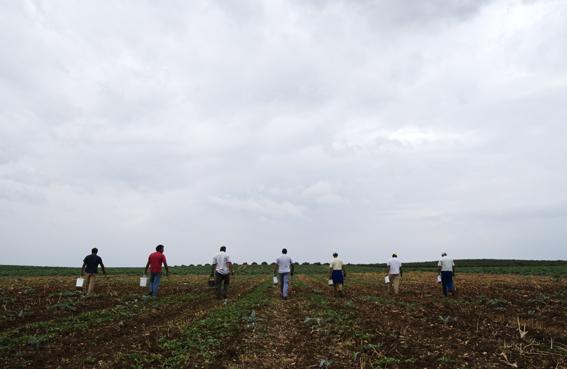 Treballant la terra