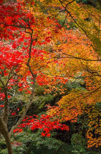 紅葉狩り - 東山公園 16