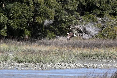 Huntington Beach State Park Birding