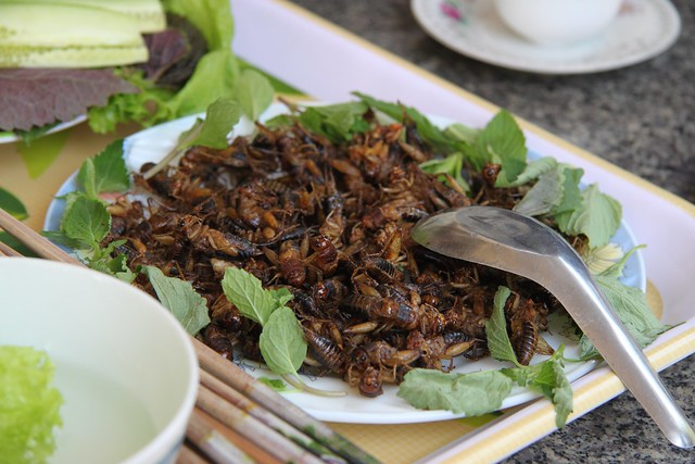 Would you eat insects? Deep fried and ready to be consumed