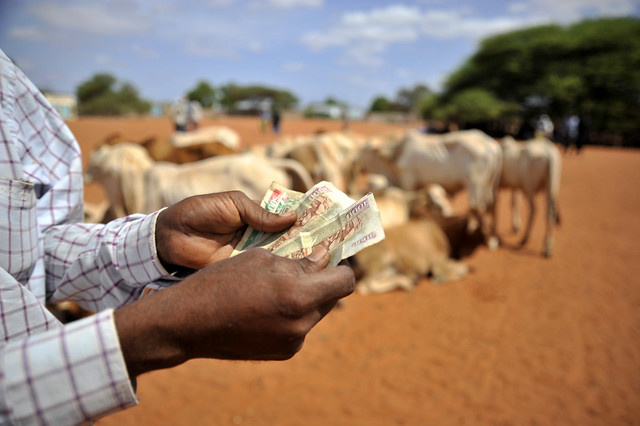 Buying animals in the livestock market in Wajir, northern Kenya