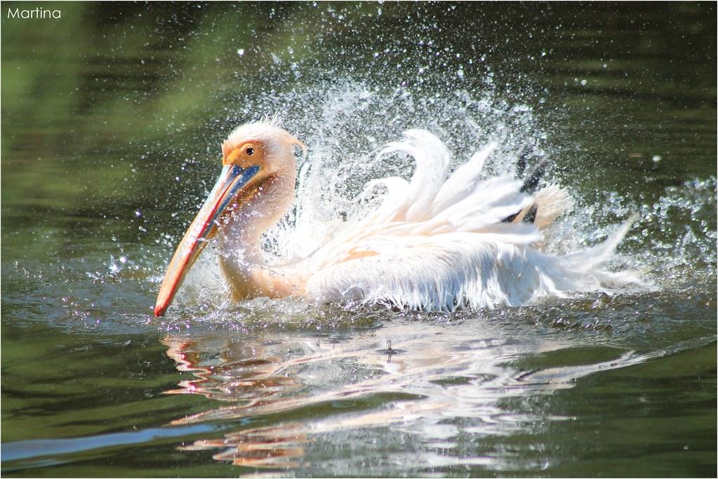 @Parco Zoo Punta Verde