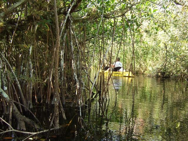 turner river november 1, 2008 018