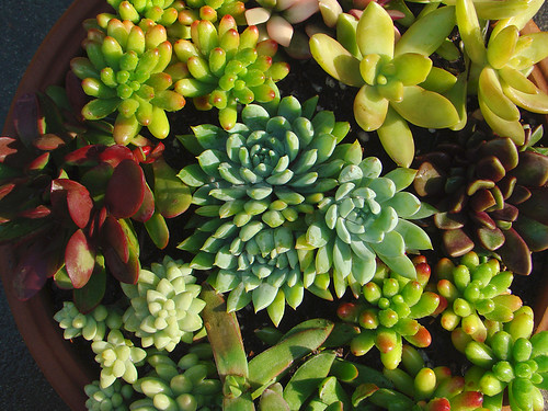 Succulents for the holidays | by mondomuse
