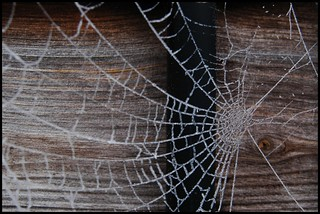 More spiders webs | by @andymatthews