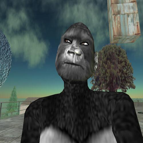 Gorilla Sex Story  Flickr - Photo Sharing-3787