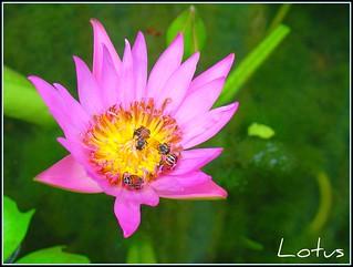 fleshlight lotus thai smile