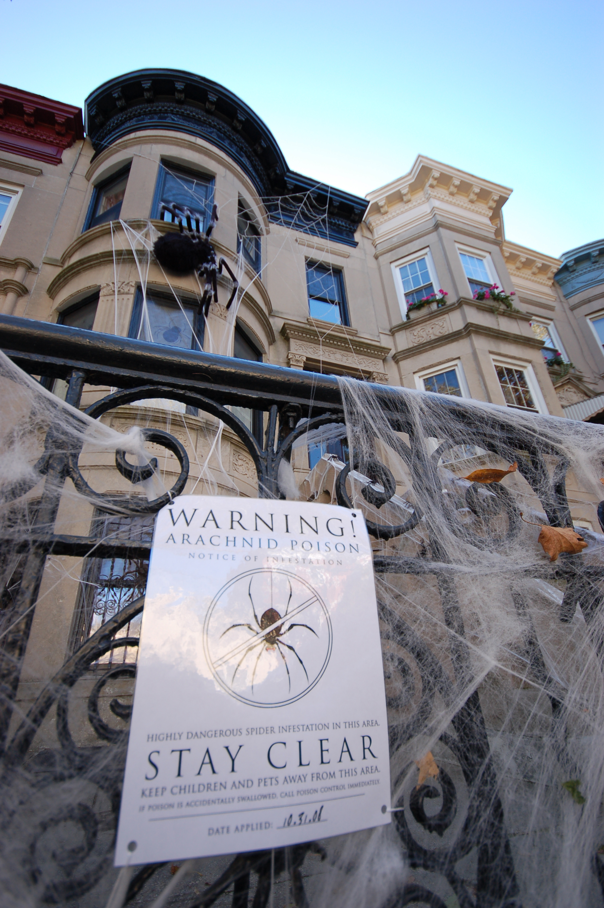 Spider Infestation Halloween www.brooklynlimestone.com