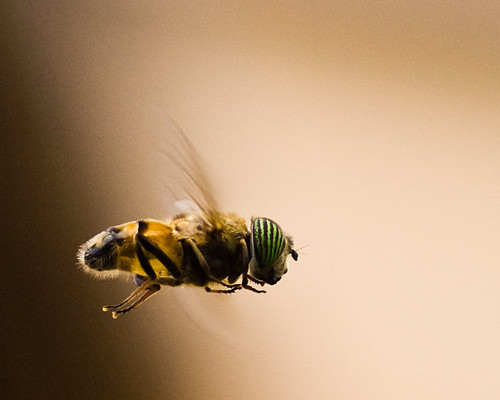 Insect Flight | by Steve Roetz