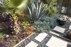 Xeriscape | by Jeremy Levine Design