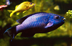Red Yellow Blue Fish | by pamelaviola