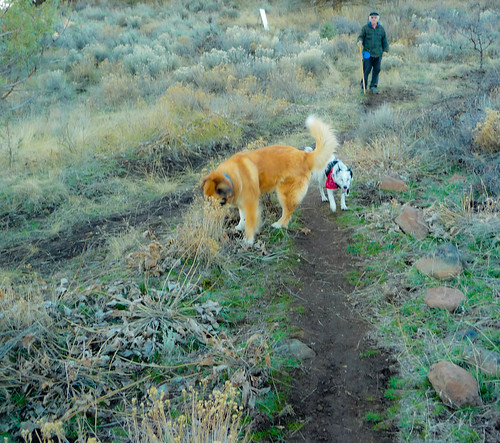 Dog Friendly Big Sur Hikes