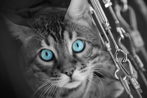 Tora selective colouring | by smurfie_77