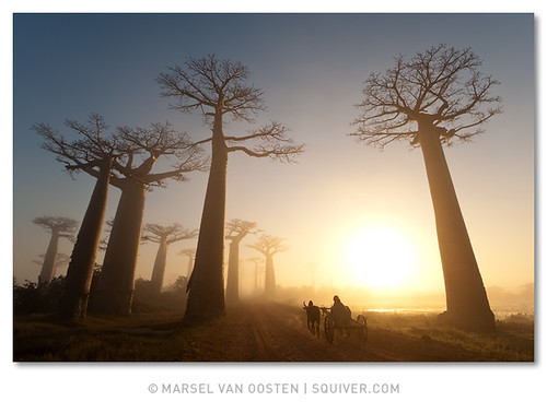 National Geographic - 3/2009 | by Marsel van Oosten