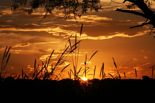 Palabana Reed Sunset