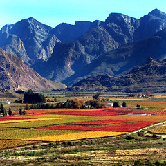 Autumn in South Africa II | by geoftheref