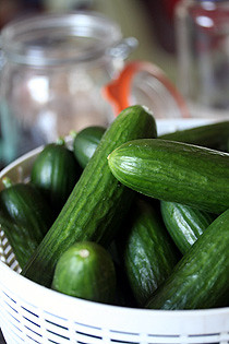 uncooked cucumbers | by David Lebovitz