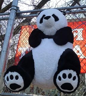 American-Born Pandas Struggle In China