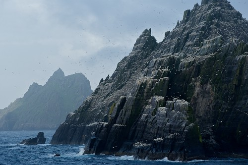 Bird Colonies on Little Skellig, Ireland | by JC Richardson