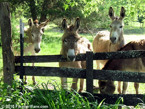 Donkettes 3 | by Farmgirl Susan