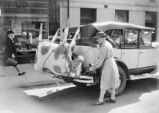 A papier-mache cow on Mrs Mellor's car, 1944 | by Australian War Memorial collection