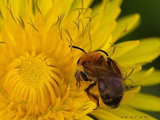 in nature have many diferent bee | by svarunn