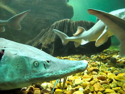 aquarium du val de loire fabien pfaender flickr
