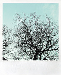 no leaves + sky | by { punzirì }