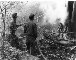 CCC crew members working as hosemen at a fire, Columbia National Forest (Washington) | by OSU Special Collections & Archives : Commons
