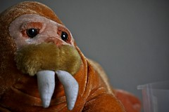 1000  images about Walruses on Pinterest | Sea ice, Baby walrus ...