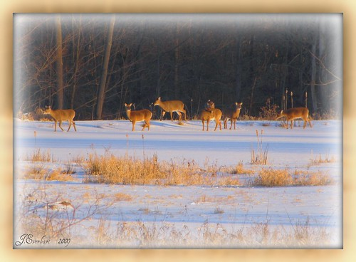 Deer on Frozen Pond by J.Everhart | by ☺♥ julev69 ♥☺ 1,925,000+ Views- THANK YOU!