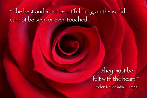 "Red Rose macro with Helen Keller quote | by IronRodArt - Royce Bair (""Star Shooter"")"