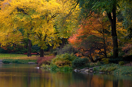 Central Park | by joe holmes