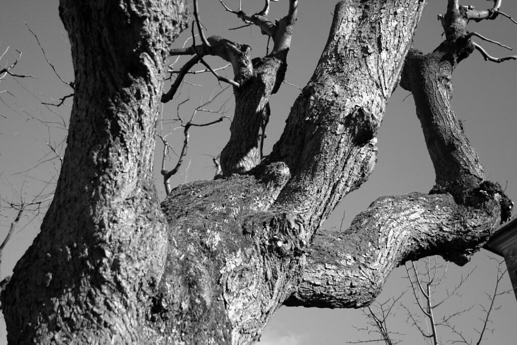im Michelsberger Garten
