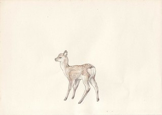 5. a little deer | by Ayco - ChildlikeWisdom