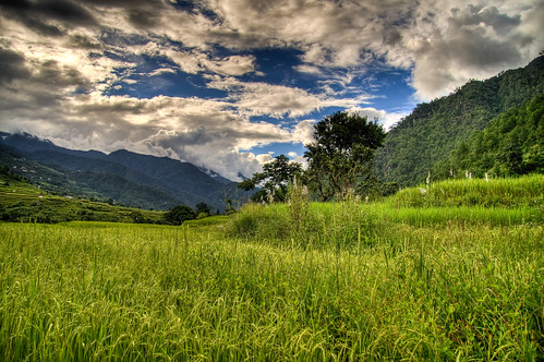Rice Fields on the Way to Khamsum Yulley Namgyal | by Bhutan-360