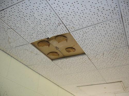 Ceiling Tile Asbestos Adhesive Glue Pods Non Asbestos