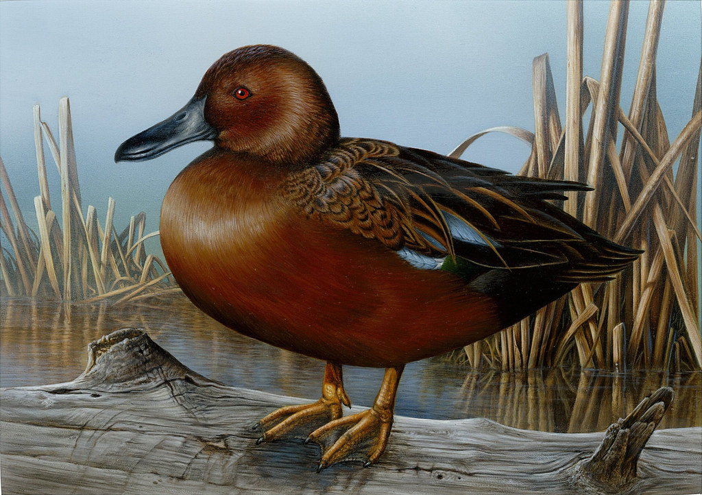 2013 Federal Duck Stamp Contest Flickr
