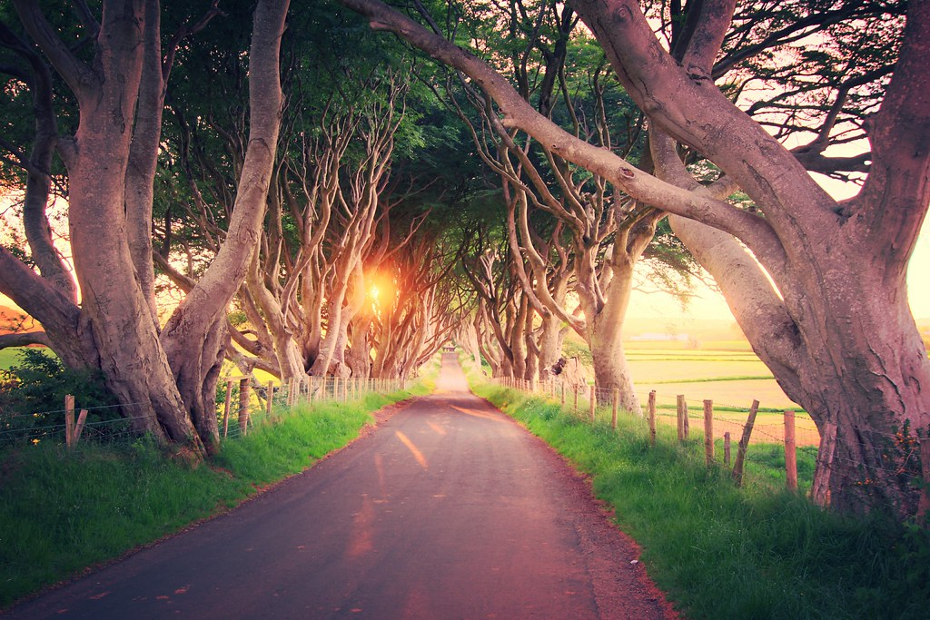 Dark Hedges at Sunset