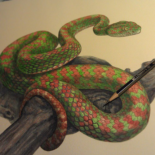 Christmas Tree Pit Viper Is Finished Hooray Art