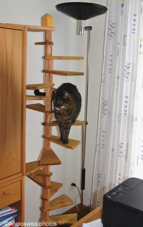 Tabby on her ladder