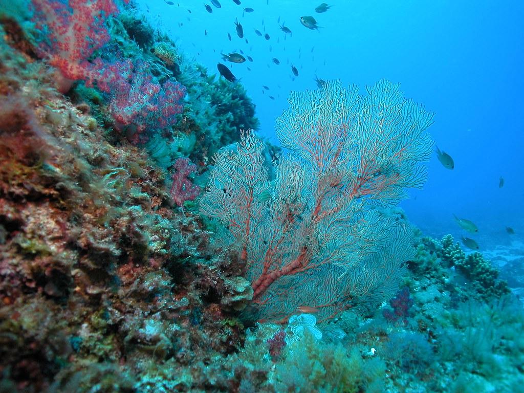 Lord Howe Island 85