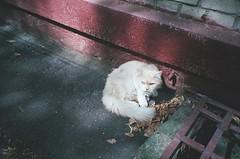 Cat from the Luigi Longo Street (original), ver.2