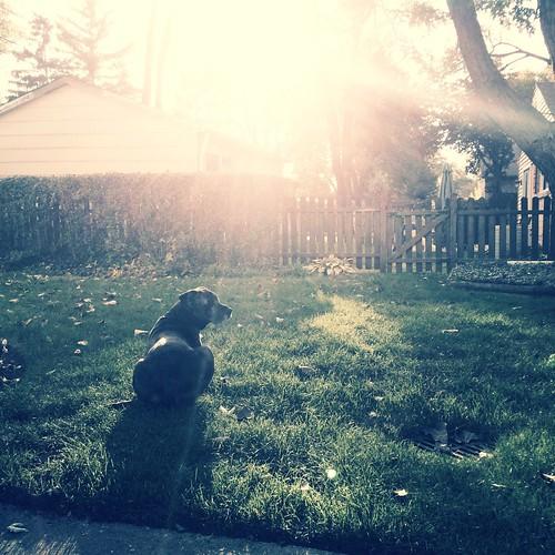 Sun shower Dog Catahoula Leopard Dog Sunshine  Spiro Bolos  Flickr # Sunshower Dog_004942