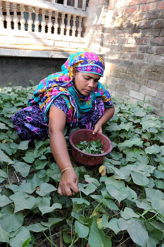 A woman working in her vegetable garden in Jessore, Bangladesh. Photo by M. Yousuf Tushar. April 23, 2014