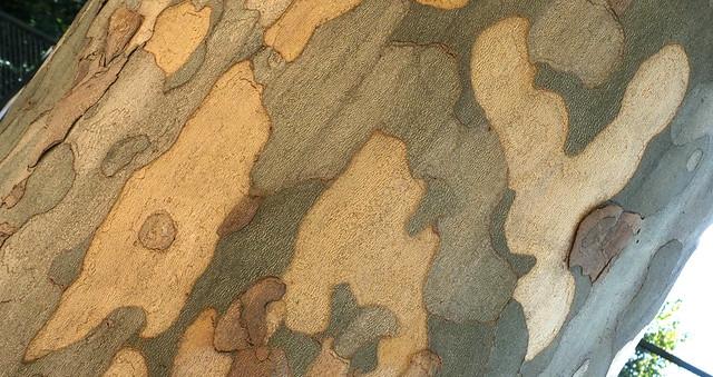 natural bark writing''AMY''#62837#